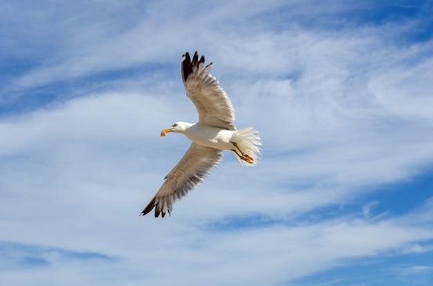 Низкоугольный снимок европейской сельдевой чайки в полете под пасмурным небом