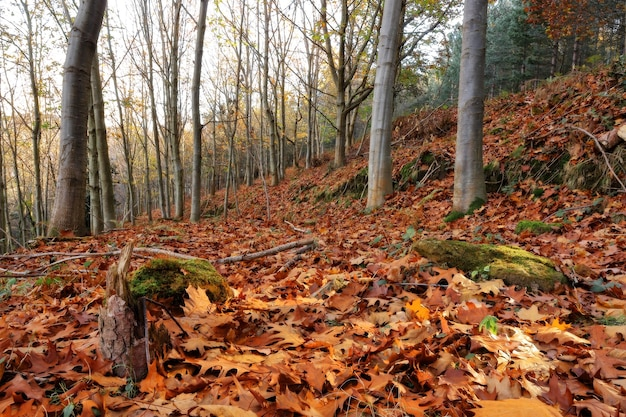 Осенний снимок деревьев в лесу под низким углом
