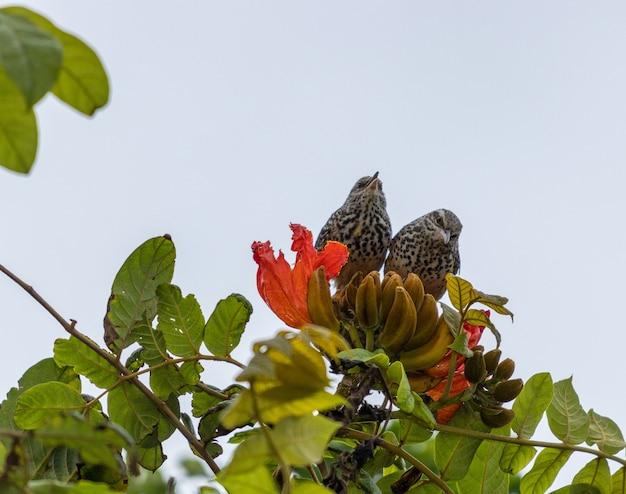 밝은 하늘 아래 나무에 자리 잡은 두 마리의 참새의 낮은 각도 샷