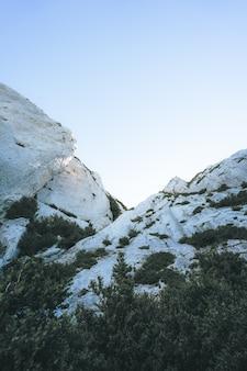 濃い緑の熱帯の木々に囲まれた白い崖のローアングルショット