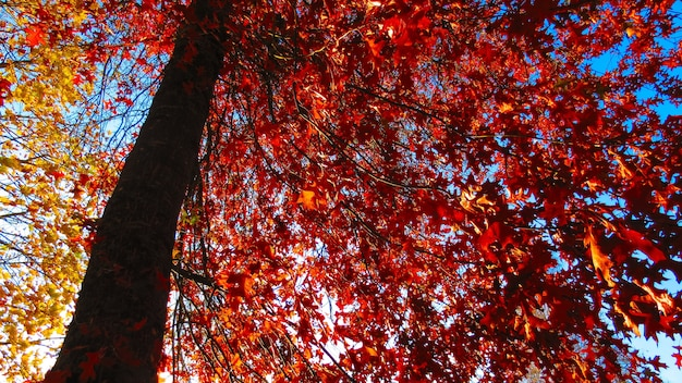 Low angle shot of red autumn leaves on a tree