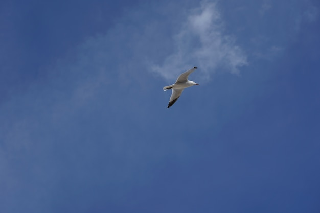 Low angle shot of a seagull flying in a clear blue sky during daytime
