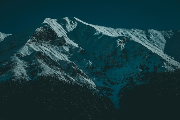 Inquadratura dal basso di cime innevate con alberi alpini all'alba