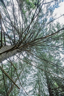 Inquadratura dal basso di un albero alto con rami e foglie verdi durante la luce del giorno, perfetto per lo sfondo
