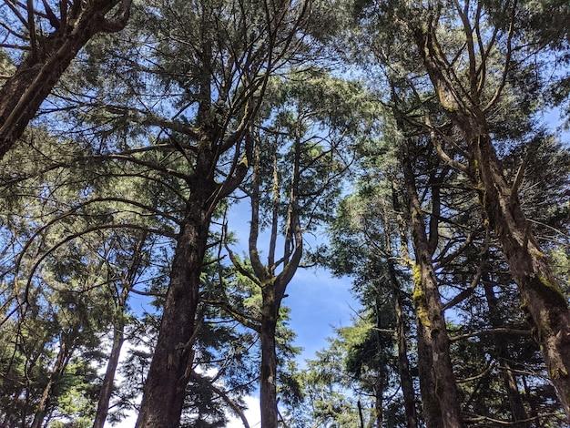 Inquadratura dal basso degli alberi ad alto fusto della foresta sotto il cielo luminoso
