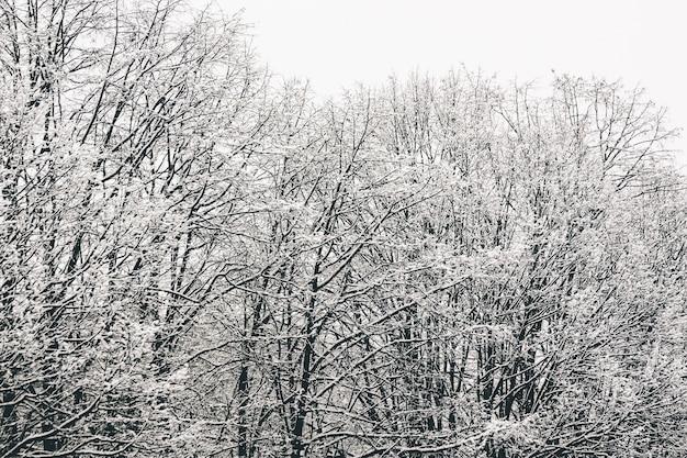 Inquadratura dal basso dei rami degli alberi completamente ricoperti di neve