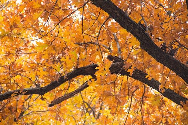 Inquadratura dal basso di un albero con foglie gialle