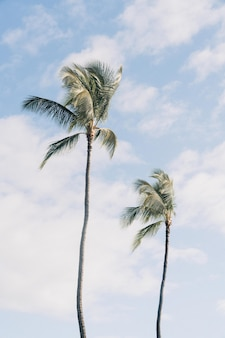 Low angle shot of two palm trees with a cloudy blue sky