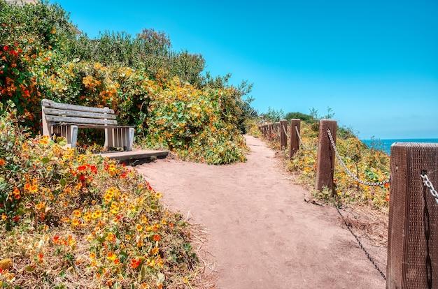 Inquadratura dal basso di una panca in legno circondata da fiori che sbocciano sotto un cielo blu chiaro