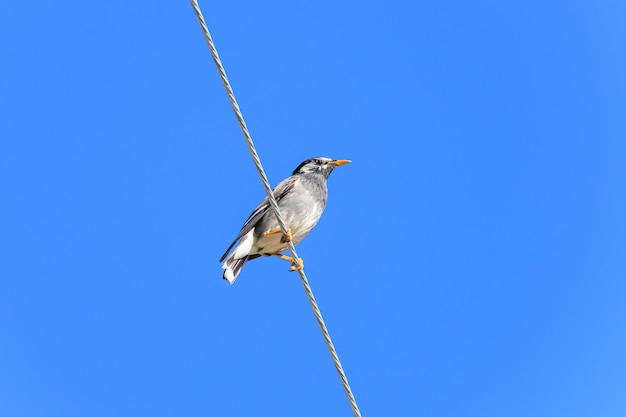 Low angle shot of a wren perched on a clothesline under a blue sky