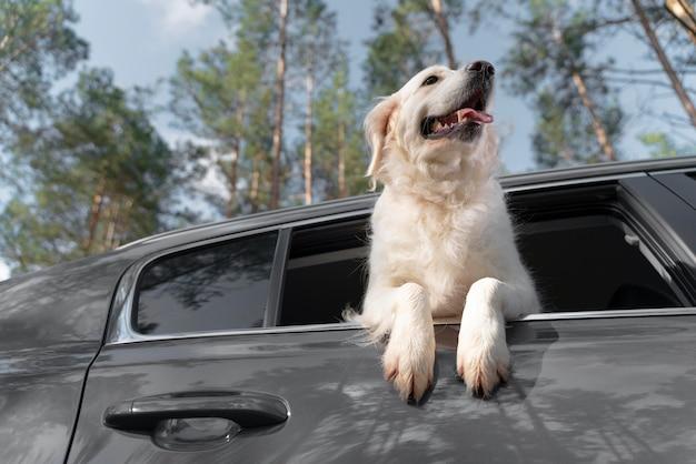 車の中でローアングルのスマイリー犬