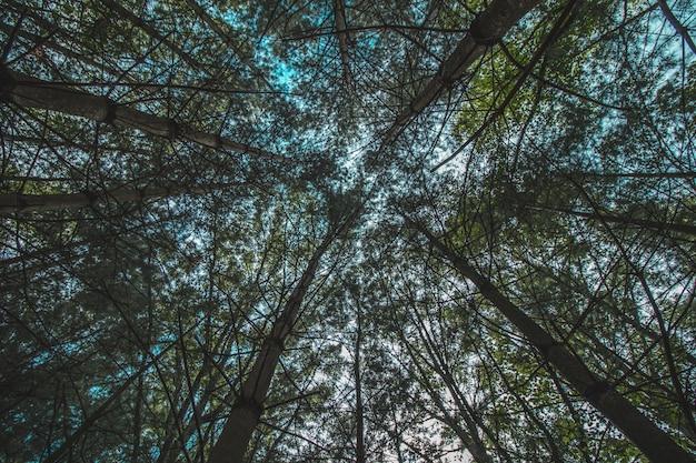 Низкий угол выстрела красивых деревьев в лесу