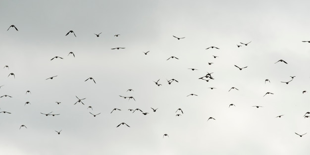 Low angle view of birds flying in the sky, plaisance, quebec, canada