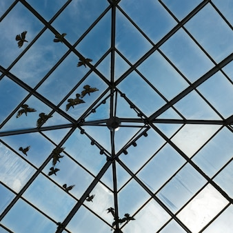 Low angle view of birds viewed through glass ceiling,  southern methodist university, dallas, texas,
