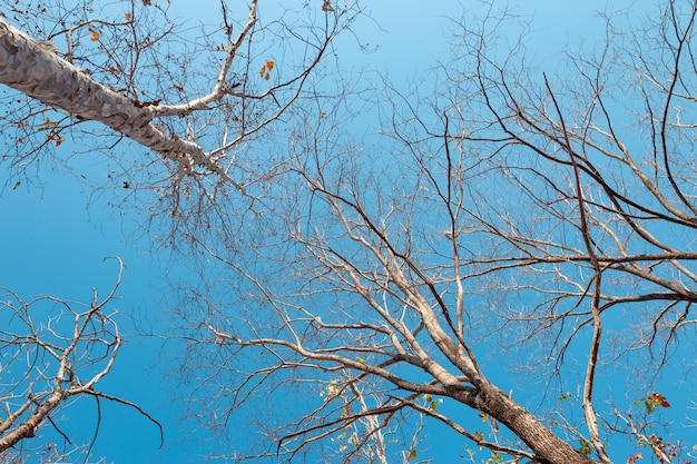 Low angle view of a group of trees on a clear blue sky.