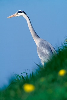 Low angle view of heron, holland