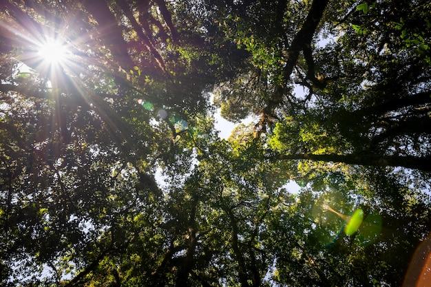 햇빛 플레어가 있는 산에서 풍부한 숲 나무를 올려다보는 낮은 각도