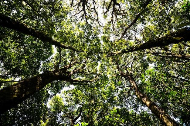 Низкий угол обзора, глядя вверх изобилия тропических лесных деревьев с зелеными листьями в горах.