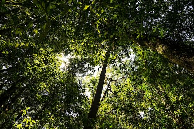 산에 녹색 잎이 풍부한 열대 우림 나무를 올려다보는 낮은 각도.
