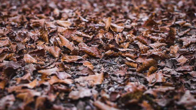 Low angle view of the muddy yellow leaves on the ground mixed with wooden sticks in fall