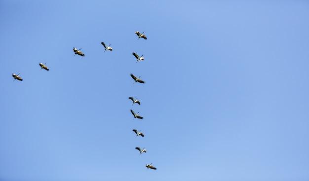 낮에 푸른 하늘을 날아 다니는 새들의 무리의 낮은 각도보기