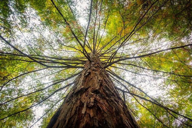 昼間の日光の下で緑の葉で覆われた木の低角度のビュー