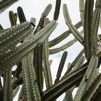 Низкий угол зрения кактусовых растений, веред ха-галиль, галилея, израиль