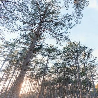 숲 나무의 낮은 각도보기