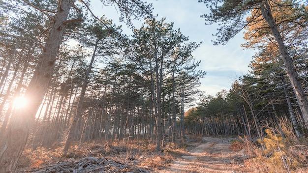 森の木々のローアングルビュー