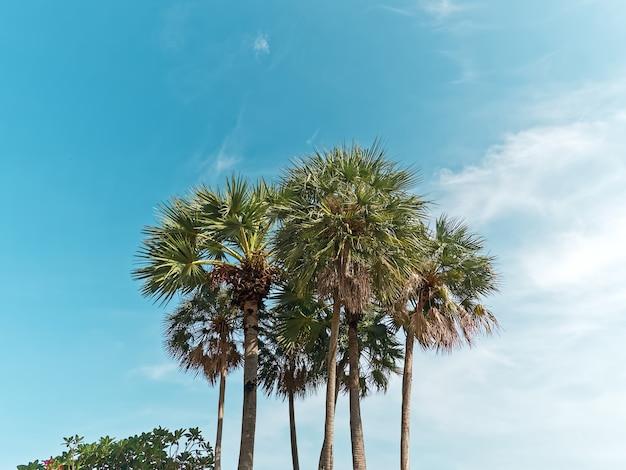 Низкий угол обзора пальм против голубого неба