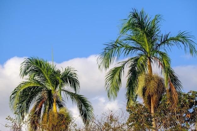 日光と日中の青い空の下でヤシの木の低角度のビュー