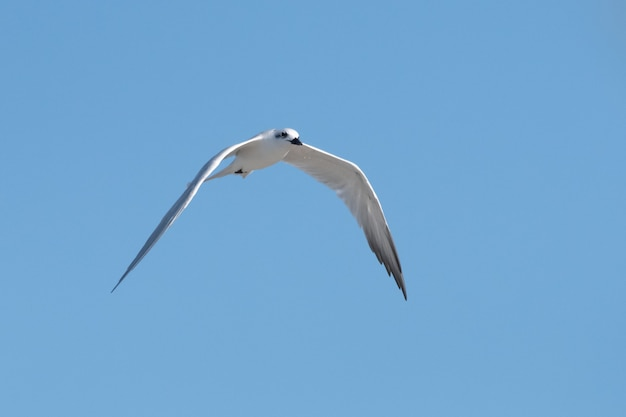 화창한 여름날 맑고 푸른 하늘을 나는 흰 갈매기의 낮은 각도 무료 사진