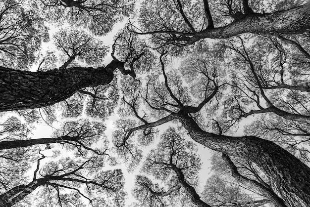 Низкий угол обзора рисунка крон деревьев на фоне голубого неба в черно-белом