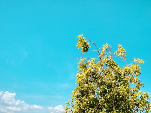 푸른 하늘에 대 한 트리 탑 가지와 잎의 낮은 각도보기