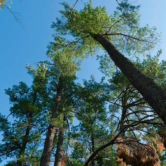Low angle view of trees, Lake of the Woods, Ontario, Canada