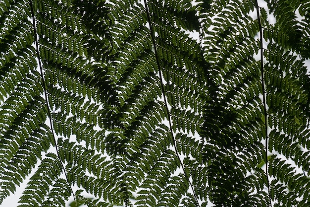 Low angle view of ostrich fern leaves on the branches under sunlight