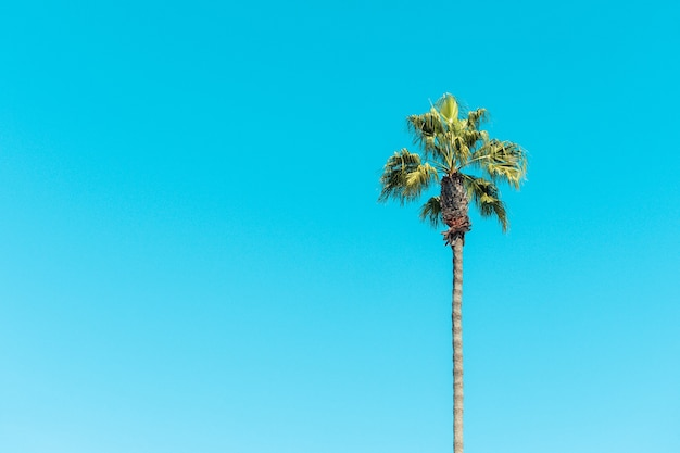 Low angle view of palm trees under a blue sky and sunlight during daytime