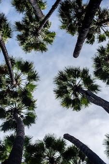 Inquadratura dal basso di palme sotto un cielo nuvoloso e luce solare
