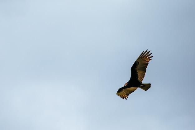 Inquadratura dal basso di un falco dalla coda rossa che vola nel cielo sotto la luce del sole