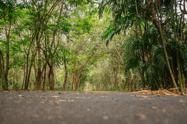 Low angle view of the shady lush green tropical forest in summer, thailand.
