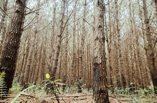高い木々のある森のローアングルビューショット
