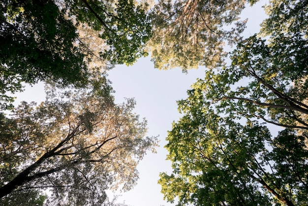 Low angle view of tree branches in park