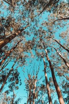 Inquadratura dal basso di alberi in un parco sotto la luce del sole e un cielo blu