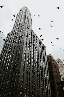 Low angled shot of a skyscraper in chicago with pigeons flying near it
