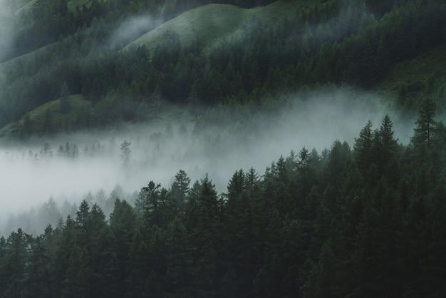 고산 어두운 숲에서 낮은 구름. 안개 숲에서 공중 대기 산 풍경입니다. 위에서 안개가 자욱한 숲 언덕을 볼 수 있습니다. 고지대의 침엽수 림 사이에 짙은 안개. 힙 스터, 빈티지 톤.