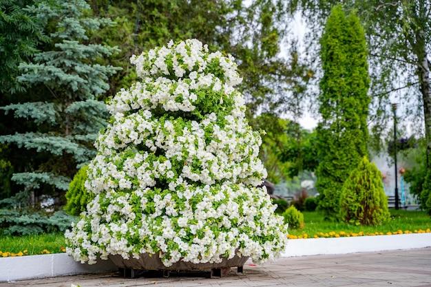 Низкорослые травянистые растения с красивыми нежно-розовыми цветками. ландшафтный дизайн.
