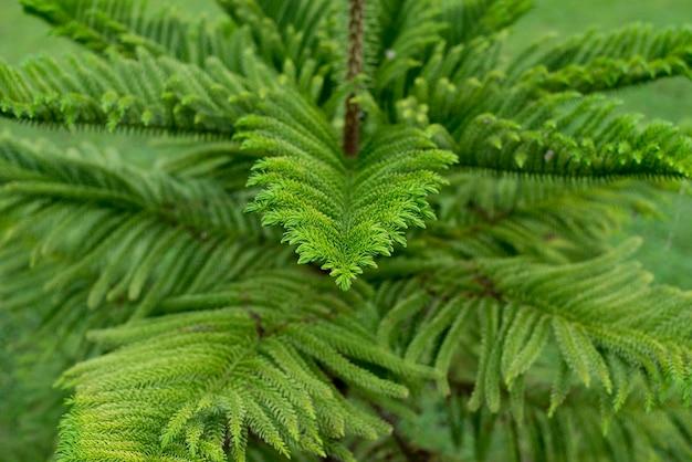 오후에 저조도 이미지 녹색 잎