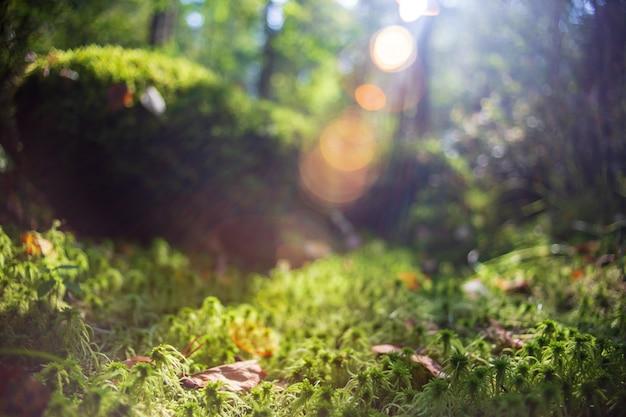 Низкая точка зрения в природном ландшафте. размытый фон природы копией пространства. экология окружающей среды