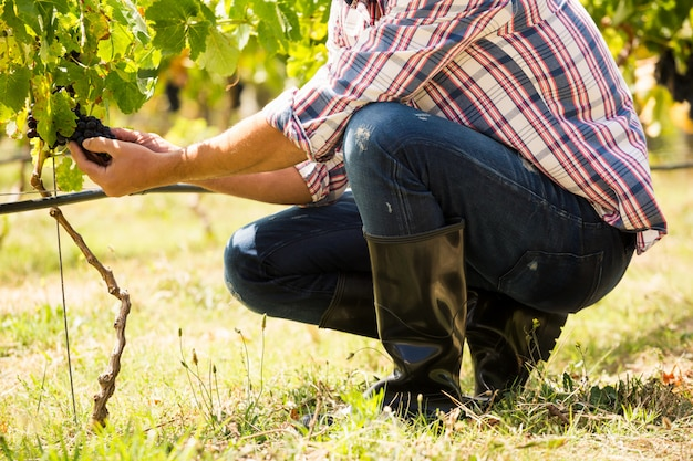 Low section of man touching grapes
