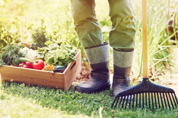 野菜の箱を持つ男性農家の低いセクション